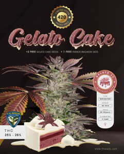 T.H.Seeds Instagram-gelato-cake-advert-small (002)
