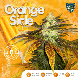 T.H.Seeds OrangeSicle-advert-popsicle-small (002)